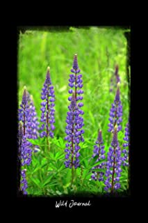 Best lupine english garden flowers Reviews