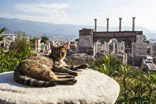 Posterazzi A cat lays in the sun on a rock at the ruins Basilica and the tomb of Saint John Ephesus Izmir Turkey Poster Print, (38 x 24)