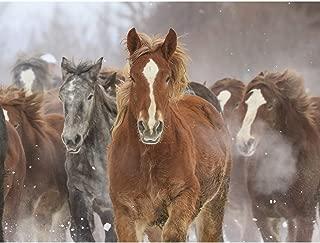 Best wild horse print Reviews