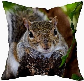 squirrel pillow case