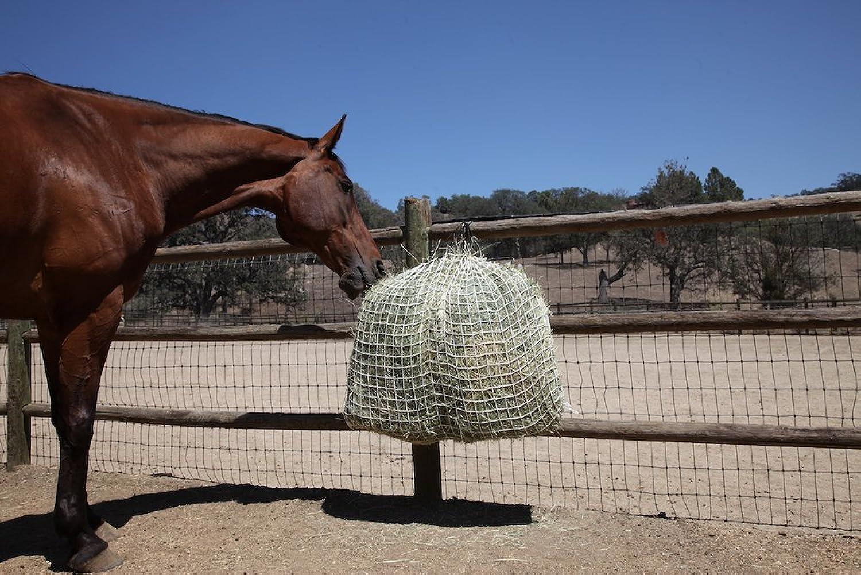 (3.8cm)  Freedom Feeder Small Mesh Hay Day Net