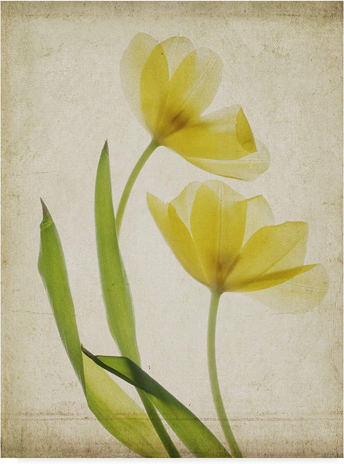 Trademark Fine Art Parchment Flowers IV by Judy Stalus, 14x19