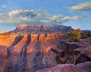 Sandstone cliffs and canyon seen from Toroweap Overlook Grand Canyon National Park Arizona Poster Print by Tim Fitzharris ...