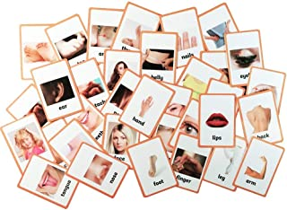 Educational Live Picture Cards of Body Parts 34 pc. set for Children ages Preschool Pre-K, thru Grade School for Parent, Teachers, Therapists to Help develop early English Language Skills
