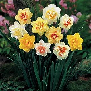 Best narcissus flower bulbs Reviews