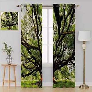 Benmo House Nature grommit Curtain Kid Blackout curtainsThe Largest Monkey Pod Tree in Thailand Eastern Green Big Branches Growth Eco Photowall Curtain 120 by 84 InchGreen Brown
