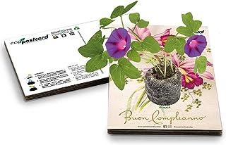 Eco-Postcard   Biglietto d'auguri compleanno con semi di Ipomea   Regalo Compleanno ecologico per la mamma amica o ragazza
