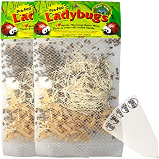 3000 Pre-Fed Live Ladybugs | Guaranteed Live Delivery | Targets Aphids, Moth Eggs, Mites, Scales, Thrips, Leafhoppers, Mealybugs and Other Slow-Moving Insects + THCity Stakes