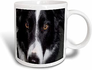 3dRose Border Collie Macro Mug, 11-Ounce