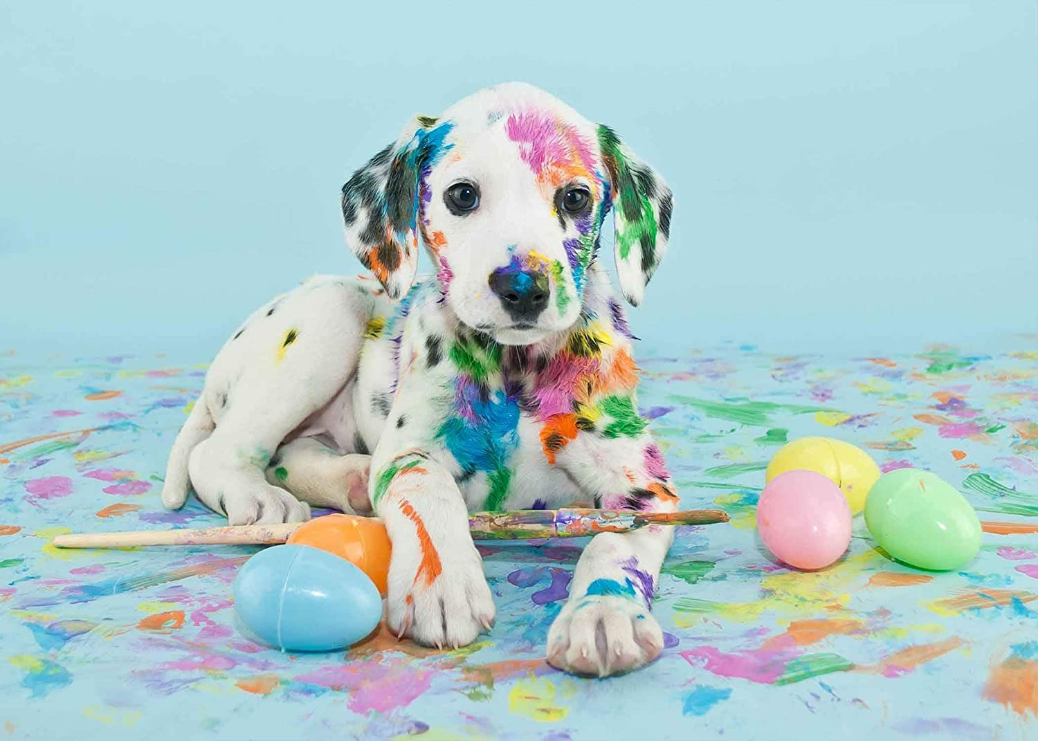 15x10ft Vinyl Pet Backdrop Colourful Dog Photography Background for Children Studio Props LYGE357 for Party Decoration Birthday YouTube Videos School Photoshoot Photo Background Props
