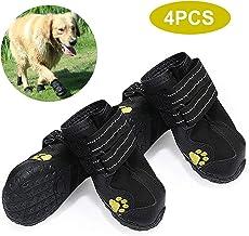 : chaussure chien