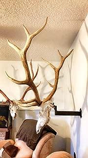 Adjustable Bull Bracket European Elk Skull Hanger Mount Kit - for Elk, Moose, Caribou, Buffalo, Cattle, and Other Large Game - Worlds Strongest Holds Over 100 pounds - Oil Rubbed Bronze -Made in US.A