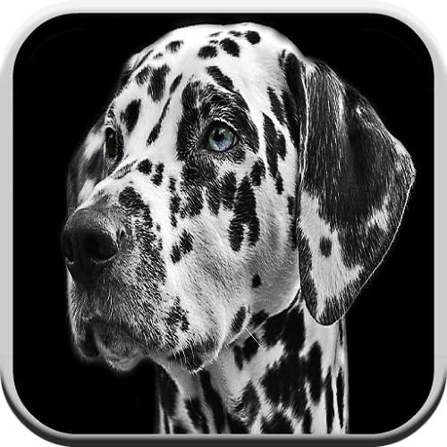Hundespiele für Kinder kostenlos 🐶: Welpenspiel für Jungen & Mädchen: Rindengeräusche, Rätsel und passendes Spiel