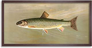 Petrie North American Fishes Brook Trout Illustration Framed Wall Art Print Long 25X12 Inch