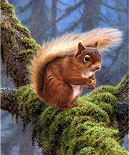 5D DIY Diamond Painting Kit for Adult Diamond Painting Full Drill Paint with Diamonds Fit DIY for Home Decor Squirrel 11.8x15.7in 1 Pack by SimingD