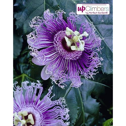 Exotische Pflanzen Winterhart Amazon De