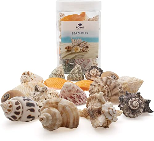 new arrival Royal discount Imports Sea Shells Beach Assorted, Colorful Ocean Seashell Accent discount Mix, Aquarium Decoration, Party Crafts Collection, Large, 1 LB outlet online sale