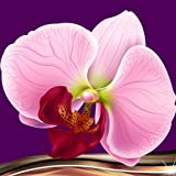 Collage di foto orchidea