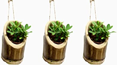RAREPRODUCTS VERTICALHANGING Planter Set of 3 Pot with NailScrew Free -3 nos