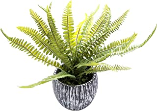 AlphaAcc Mini Potted Artificial Plants Real Looking Plastic Fern Plants with Rustic Black Cement Planter for House Office Desk Decor