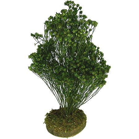 Krippenbotanik Unbekannt Zypresse aus Naturmaterial f/ür Weihnachtskrippe 40-42 cm