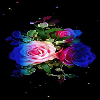 Rainbow Roses Live Wallpaper