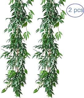 italian ruscus greens