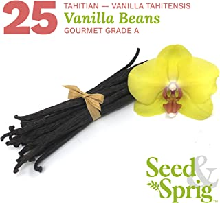 Seed & Sprig Tahitian Vanilla Beans | 25 Pack | Bulk Whole Vanilla Pods & Seeds for Baking, Coffee, Brewing, Cooking | Gourmet Grade A | 5.5+ inches Non-GMO Long, Plump, Moist