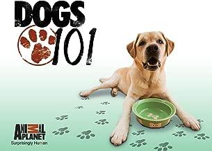 Best dog 101 videos Reviews