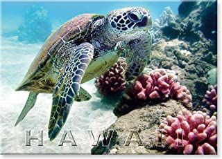 Pacifica Island Art Refrigerator Magnet Bebe Sea Turtle Honu Hawaii by M&M Sweet