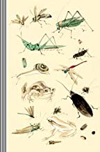 Insects Illustrations Journal Entomology Biology: Bugs Asian Japanese Drawing 19th Century Vintage Art Journal Artsy Gift Composition Notebook, Lined Paper, 150 Pages, 6