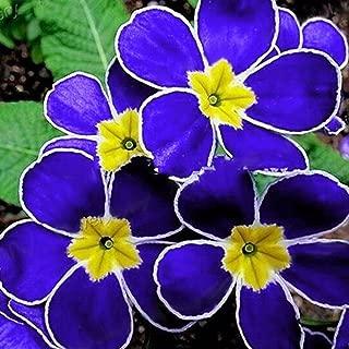 Gracefulvara 100pcs Blue Evening Primrose Seeds Flower Bloom In Your Garden