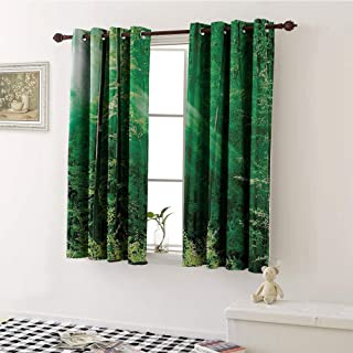 Farm House Decor, Blackout Window Curtain, Sunlight Bursting into The Forest Trees Foliage Misty Morning Serenity Picture, Customized Curtains W55 x L45 Inch Green White