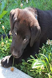 PUPPY: The Labrador Retriever, or just Labrador, or Lab is a type of retriever-gun dog. The Labrador is one of the most popular breeds of dog in Canada, the United Kingdom and the United States.