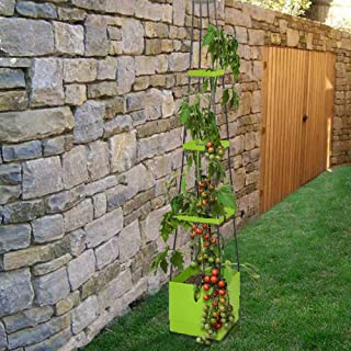 Best watering hanging tomato plants Reviews