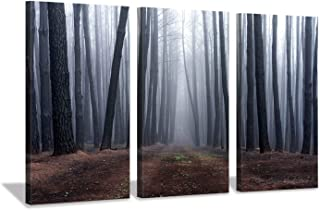 pine tree forest pictures