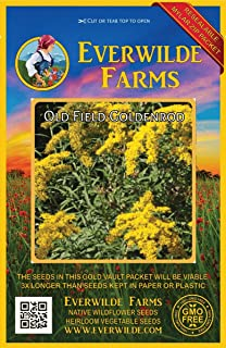 Everwilde Farms - 2000 Old Field Goldenrod Native Wildflower Seeds - Gold Vault Jumbo Seed Packet