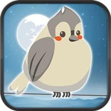 Fat Nightbirds