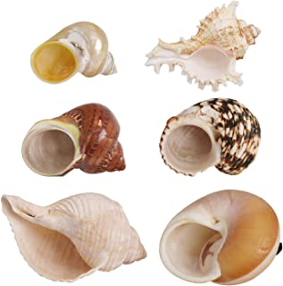 Petawi Flukers Hermit Crab Growth Shells Assorted Size Natural Changing Sea Shells for Hermit Crabs No Painted Hermit Crab Supplies - 1 to 3 inch Opening Width
