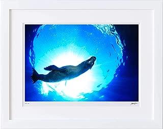 【写真工房アートフォト 額装写真】 カリフォルニア・アシカ/ラパス/メキシコ(ホワイト 大判サイズ 557mm×442mm)