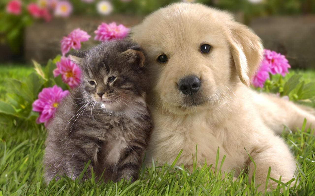 Amazon.com: ConversationPrints Best Friends CAT & Dog Glossy Poster Picture  Photo Kitten Puppy Cute Cuddly: Prints: Posters & Prints