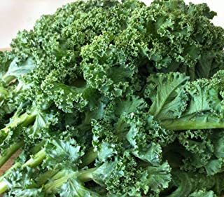 Best tuscan kale seeds for sale Reviews