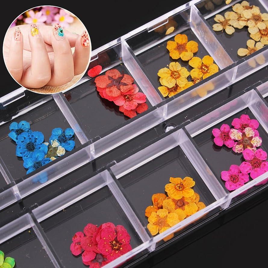 できる面積第二ドライフラワー 押し花 ネイル アートパーツネイルパーツ ハンドメイドアクセサリー 60枚入り12色入り×5枚 透明収納ケース