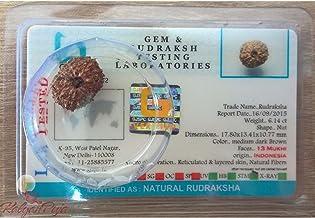 13 Mukhi Certified Rudraksha (Indonesian Java)