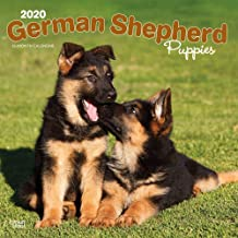 2020 German Shepherd Puppies Wall Calendar, by BrownTrout