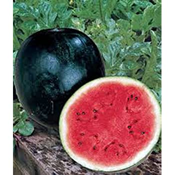 Watermelon, Sugar Baby, Heirloom, Organic 100 Seeds, Small, Sweet N Delicious