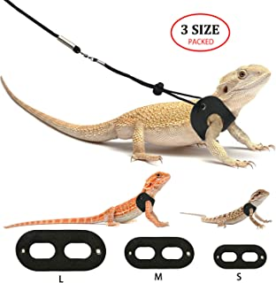Bsfl For Bearded Dragons