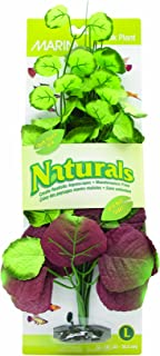 Marina Naturals Pennywort Silk Plant
