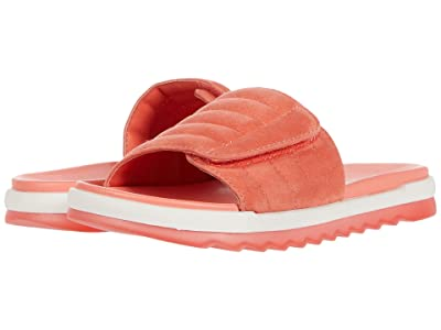 Cougar Lupin (Coral) Women