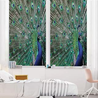 Peacock 3D No Glue Static Decorative Privacy Window Films, Peacock Displaying Elongated Majestic Feathers Open Wings Picture,17.7